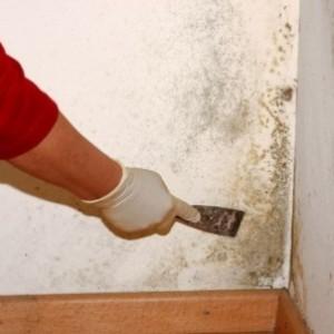 удаление грибка со стены