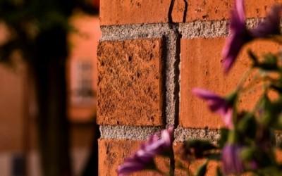растения раскалывают стенку