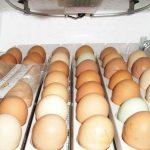 Домашние и промышленные инкубаторы для куриных яиц